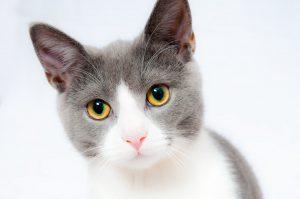 Kattengeur uit huis verwijderen